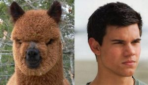 Celebrities Who Look Like Llamas