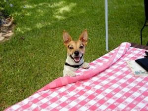 Ingridients that are good and bad for your pet dog